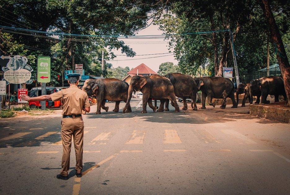 Elephants crossing a busy road