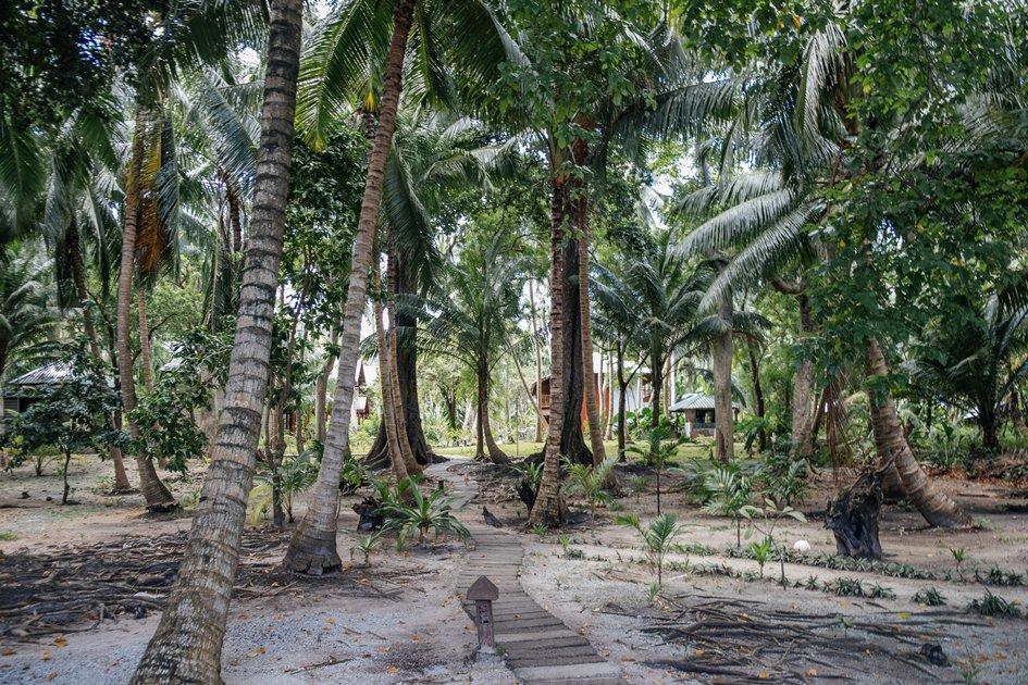 Green trees of Andaman