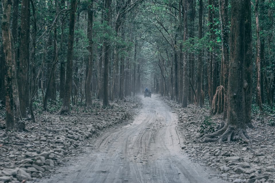 jungle safari path in Jim corbett